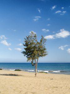 Tree at Maspalomas Beach
